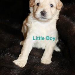 Golden Blonde Little Boy
