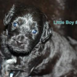 Phantom Little Boy