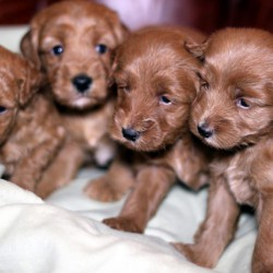 Puppies have arrived!